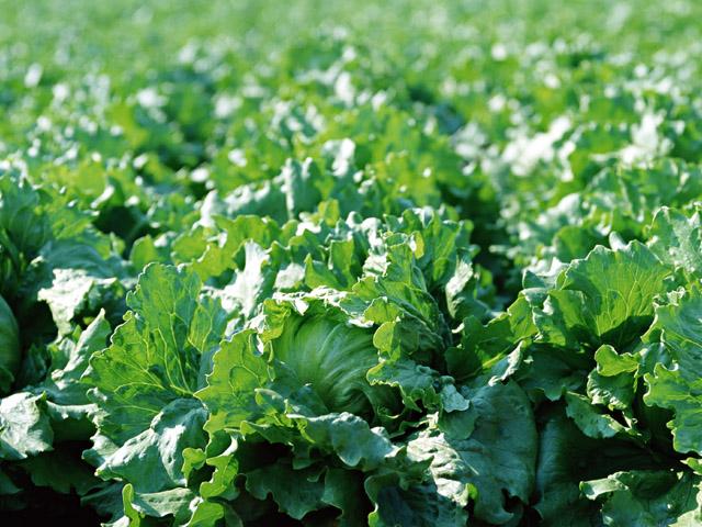 ビニールハウス栽培に適した植物